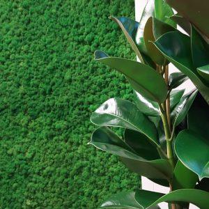 NATUREMOSS - Moss - Rainforest