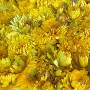 Innerspace Cheshire - Helichrysum