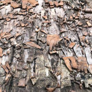 Innerspace Cheshire - Birch