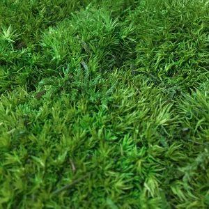 Innerspace Cheshire - Freund Moss