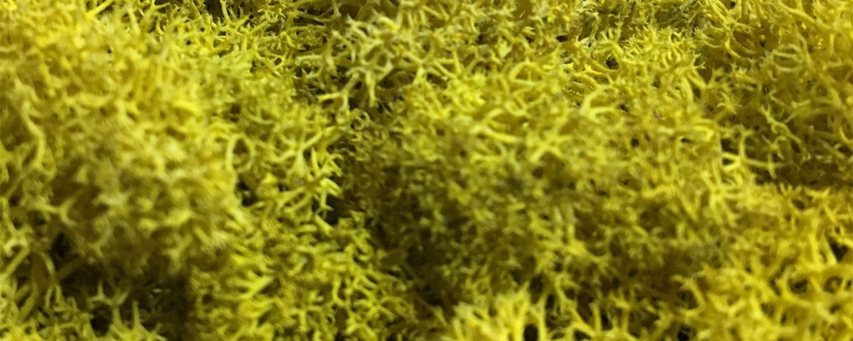 Innerspace Cheshire - Moss Walls and Moss Signage