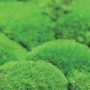 NATUREMOSS - Moss - Foothill