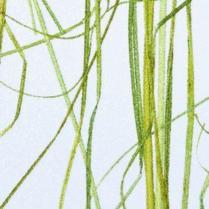 Innerspace Cheshire - Resin - Beargrass