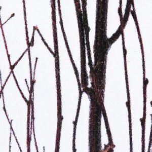 Innerspace Cheshire - Resin - Birch