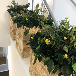 NATUREVERDE - Foliage - Planters