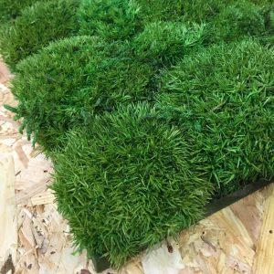 Bobble Moss