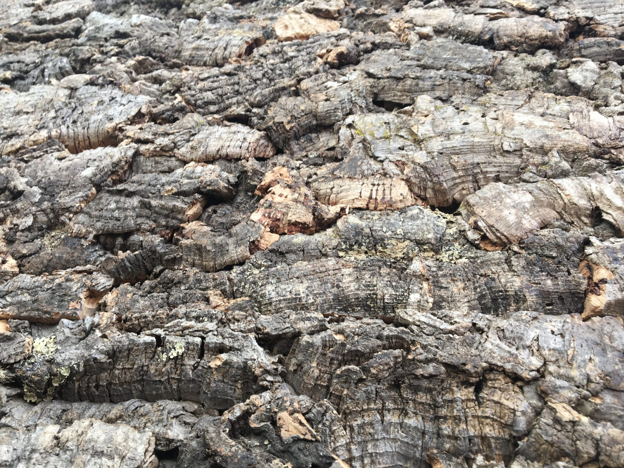 Innerspace Cheshire - Cork Bark