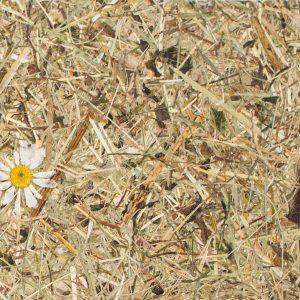 Innerspace Cheshire - Hay - Daisy