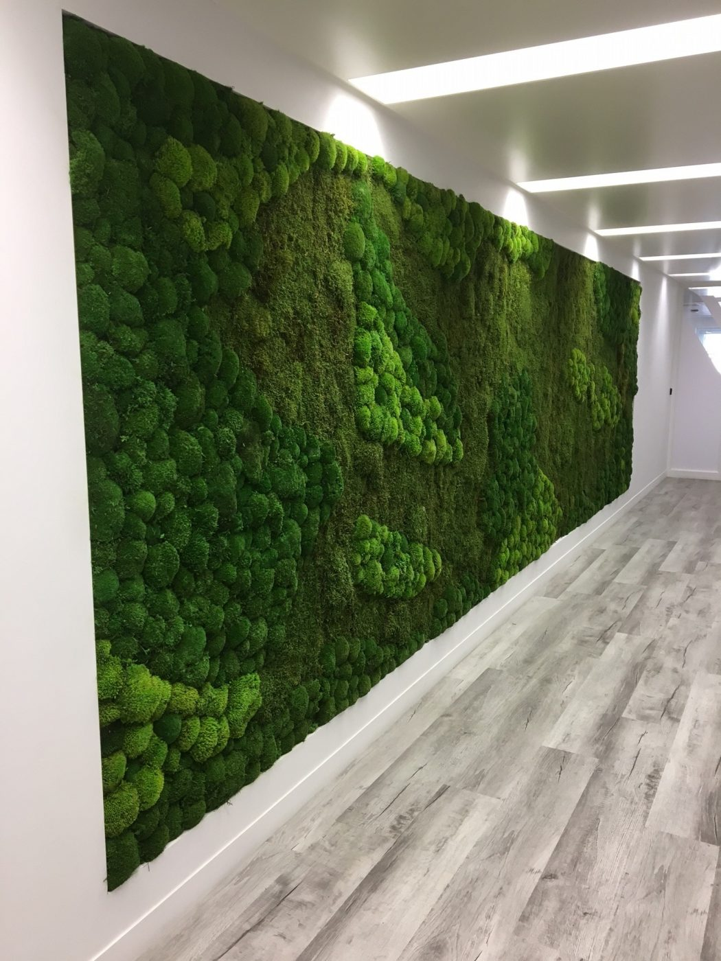 how to grow moss on a wall