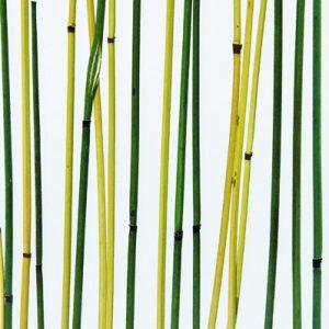 Innerspace Cheshire - Resin - Bamboo Green Yellow