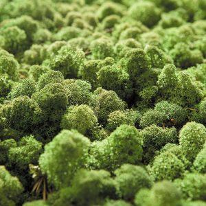 Innerspace Cheshire - Moss