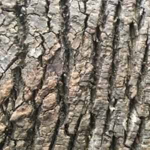 Innerspace Cheshire Poplar Wall Panel