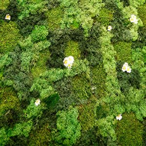 Naturemoss with Daisies