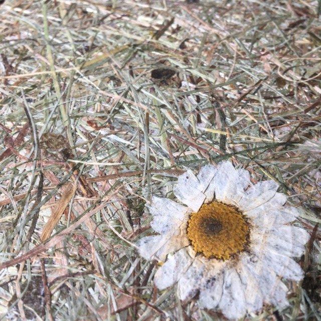 Innerspace Cheshire - Hay